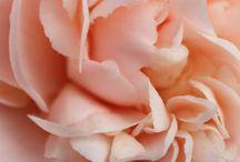 Peach ~ Coral ~ Orange