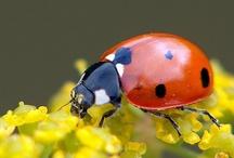 Ladybugs ❤️