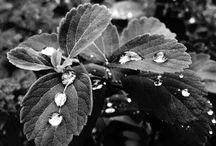 Nature / iPhone 4s photos