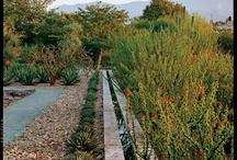 jardines deserticos