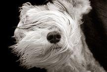 puppy lover / catioríneos