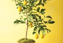 rostliny a zahrádka