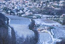 Last Chistmas!! / Let is snow Lei it snow Let it snow....our vineyards!