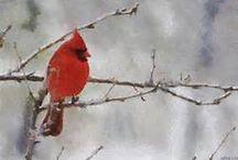 Beautiful Red Birds (Cardinals)