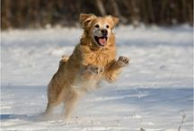 Pet Safety / Keep your pets safe year round with this collection of safety tips!
