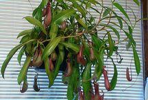 Plants that I want