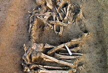 Archaeology / Images and Videos of amazing archaeological facts and efforts.