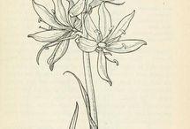 텍스타일식물