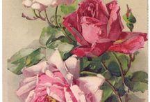 виденье розы