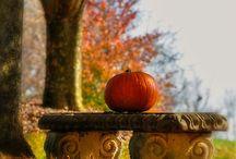 dynia / pumpkin / halloween