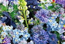 Színek. Szeretem. / Colours I love. / A virágok színe elragadó, meglepő, csodálatos, varázslatos. Ebben az albumban a különleges színeket gyűjtőm.