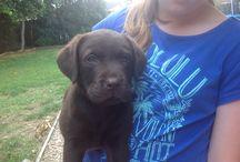 Our dog Marley / Birthdate 1st August 2014