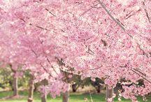 ☁️ Spring ☁️