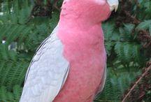 Vogelei