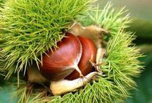 Seeds-Pods- Fruits-S