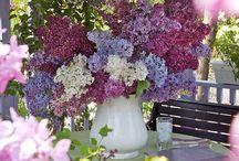 Lilacs, syreenit