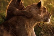 Animali / Foto