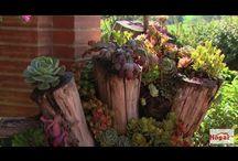 vídeo materas naturales troncos