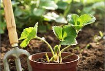 Gardening / by Tayci S.
