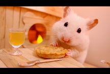 Best hamsters videos!  :) <3