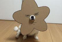 Disfarces para cães em cartão