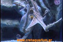 sea and sealife_aquarium