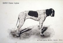 Pointers / Pointer dogs