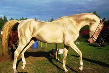 Horses & Equestrian accoutrements