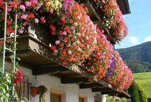 clădiri cu flori