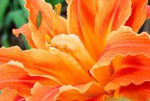 Naranja / by Ashley Warner