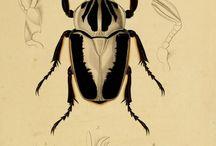 A turma dos Coleópteros