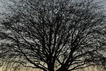 Trees / by Heather Bennett