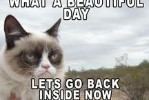 Grumpy cat / For all grumpy cat lovers