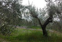 Toscana / pics from Tuscany