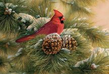 Cardinals / by Debbie Clark