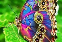 farfalle / by piero musmeci