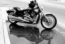 Harley Davidson  / by Michelle Kaiser
