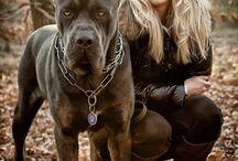 Μεγάλα σκυλιά