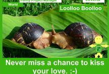 Loolloo Boolloo Lovers