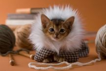 """On the Catwalk...Cats in Clothes / """"Women and cats will do as they please, and men and dogs should relax and get used to the idea."""" / by Nancy Martin"""