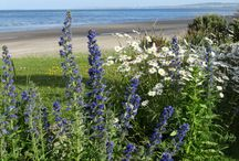 Cottages Ireland - Organic Cottage Gardens / Six exclusive 300 year old cottages nestle on the beach front on Ireland's East Coast.  The organic flower gardens are a treat in themselves embellishing this most special of locations.