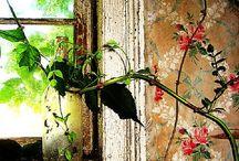 Beautiful walls / Vakre vegger