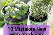 pot herb garden