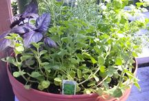 Herb Gardening Pots made at Sunshine / All you need for Herb Gardening can be found at Sunshine Nursery. Stop in and ask our knowledgeable and talented staff. They're always happy to help.