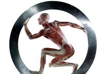Plasticized bodies-( Dr. Gunther Von Hagens ) / by Cardelli Alessandro