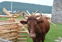 Animals at Fort Ticonderoga / Animals at Fort Ticonderoga during various special events throughout the season!