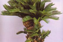 pam tree