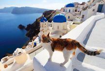 Gatos en paisajes