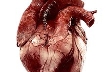 human_anatomy