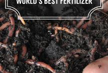 Vermicocompost vertilizer With Earthworms